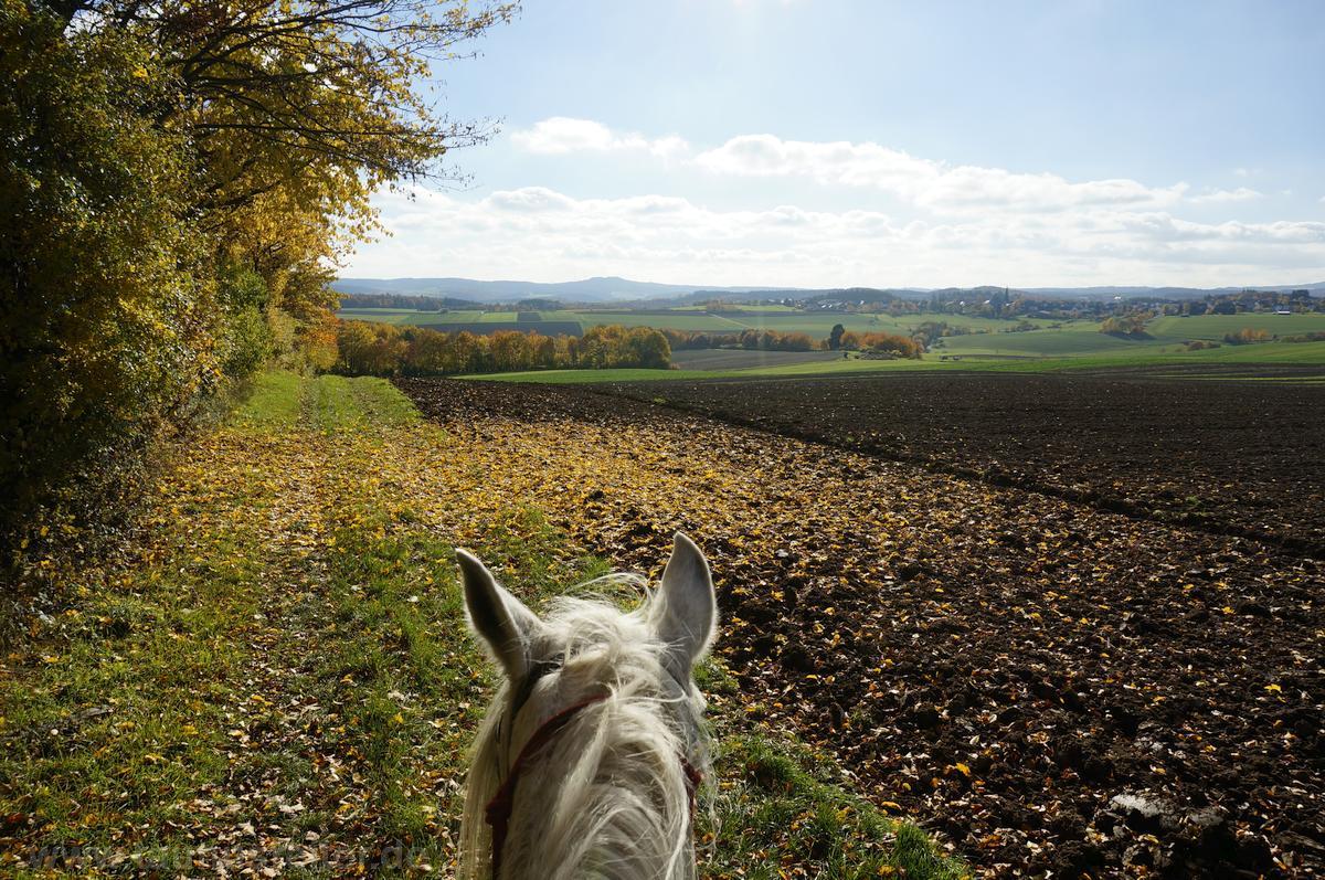 Der Weg des Reiters